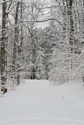 Journal Winter Weather Woodland Path: (Notebook, Diary, Blank Book)