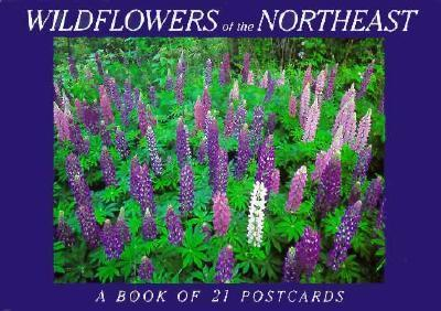Wildflowers of the Northeast