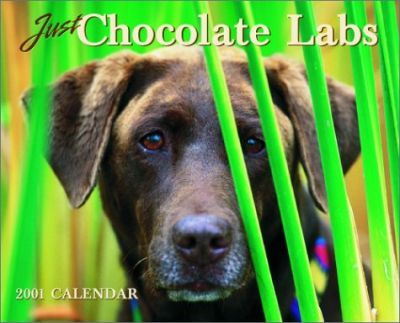Just Chocolate Labs