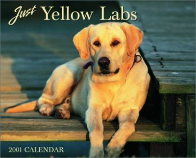 Just Yellow Labs