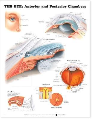 The Eye: Anterior and Posterior Chambers