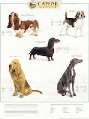 Canine Hound Group
