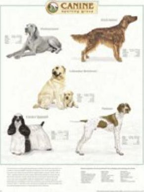 Canine Sporting Group Pl1.5