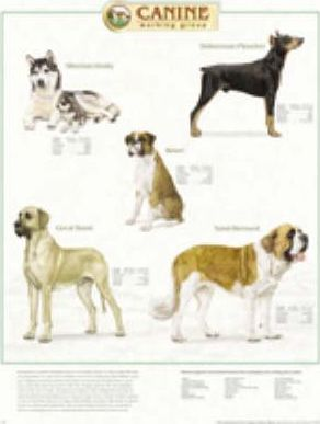 Canine Working Group Pl1.5