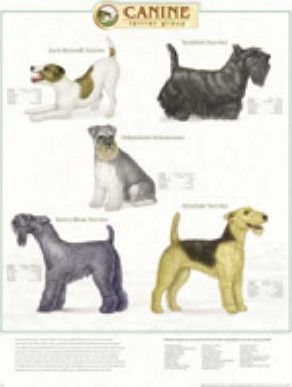 Canine Terrier Group Pl1.5