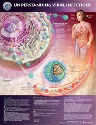 Understanding Viral Infections Anatomical Chart