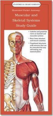 Muscular and Skeletal Systems: Study Guide