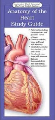Anatomy of the Heart: Study Guide