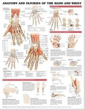 Anatomy and Injuries of the Hand and Wrist Anatomical Chart