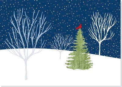 Deluxe Boxed Christmas Cards: Midnight Cardinal