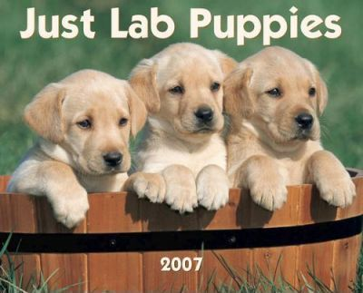 Just Lab Puppies 2007 Calendar