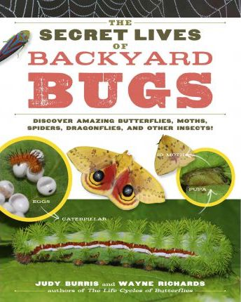 The Secret Lives of Backyard Bugs : Discover Amazing Butterflies, Moths, Spiders, Dragonflies, and Other Insects!