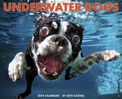Underwater Dogs Wall Calendar