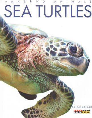 Amazing Animals: Sea Turtles