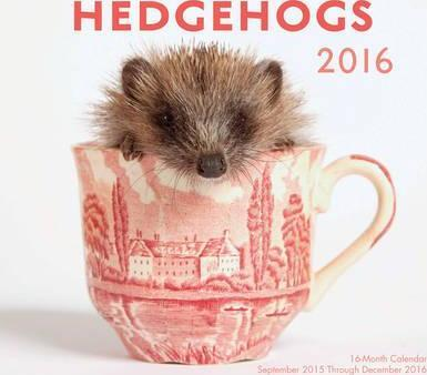 Hedgehogs 2016 Mini : 16-Month Calendar September 2015 Through December 2016