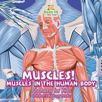 Muscles Muscles In The Human Body Anatomy For Kids Childrens