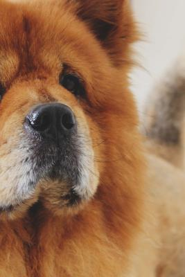 Cute Chow Chow Dog Journal  Take Notes, Write Down Memories in This 150 Page Lined Journa