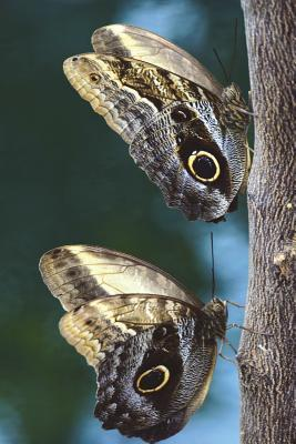Owl Butterfly Pair on a Tree Journal  Take Notes, Write Down Memories in This 150 Page Lined Journal