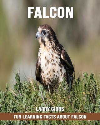 Fun Learning Facts about Falcon