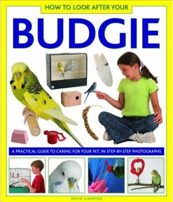 How to Look After Your Budgie Cover Image