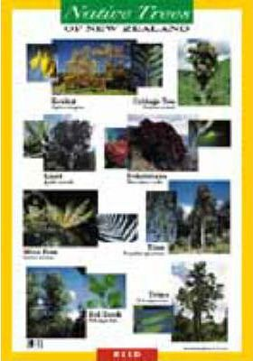 New Zealand Native Trees Wallcharts: 520mm x 765mm
