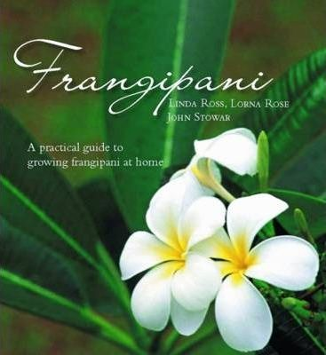 how to grow frangipani in qld