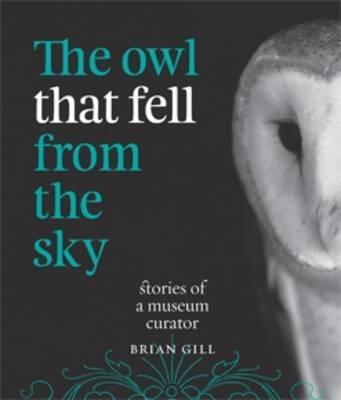 The Owl That Fell from the Sky