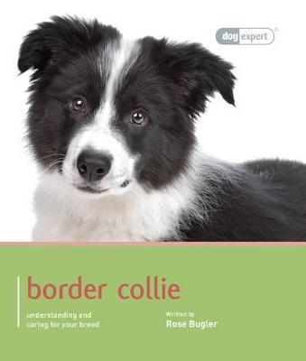 Border Collie- Dog Expert