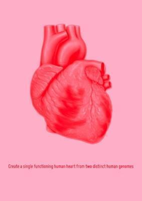 Create a Single Functioning Human Heart from Two Distinct Human Genomes