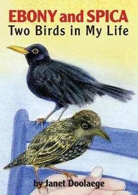 Ebony and Spica: Two Birds in My Life