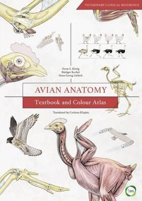 Avian Anatomy : Textbook and Colour Atlas