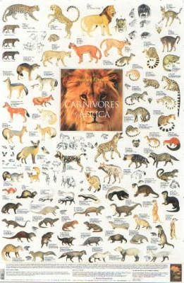 Carnivores of Africa