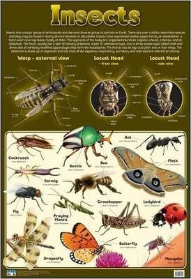 Insects: Wall chart