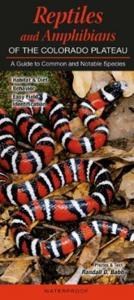 Reptiles and Amphibians of the Colorado Plateau  A Guide to Common & Notable Species
