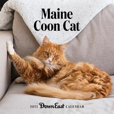 2021 Maine Coon Cat Wall Calendar