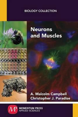 Neurons and Muscles