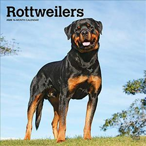Rottweilers 2020 Square Wall Calendar