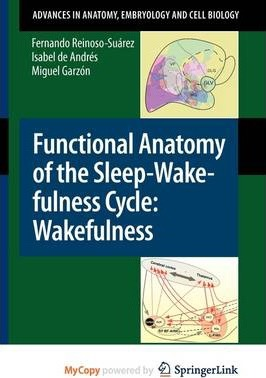 Functional Anatomy of the Sleep-Wakefulness Cycle