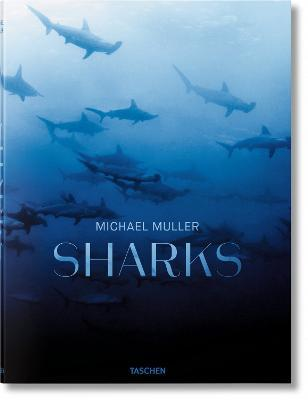 Sharks : Face-to-Face with the Ocean's Endangered Predator