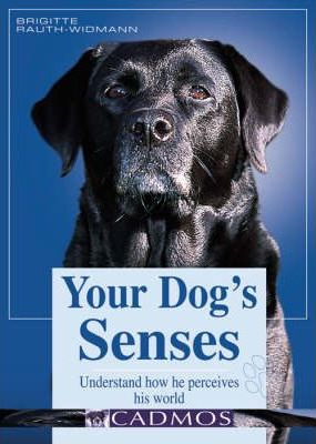 Your Dog's Senses