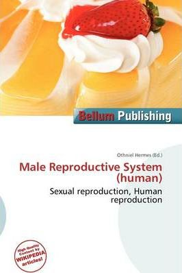 Male Reproductive System (Human)