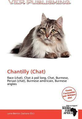Chantilly (Chat)
