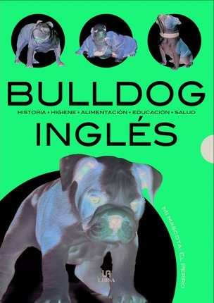 Bulldog ingles/ English Bulldog