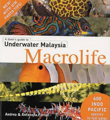 A Divers Guide to Underwater Malaysia Macrolife