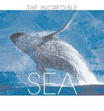 The Sea  Illustrated   Hardcover  by Manferto de Fabianis, Valeria