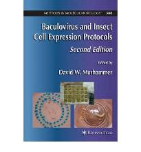 Baculovirus and Insect Cell Expression Protocols: 388  Methods in Molecular B...