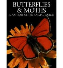 Butterflies & Moths: A Portrait of the Animal World by Sterry, Paul