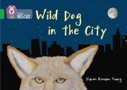 Wild Dog in the City
