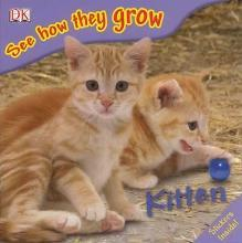 See How They Grow Kitten