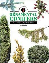 Identifying Ornamental Conifers : the New Compact Study Guide and Identifier